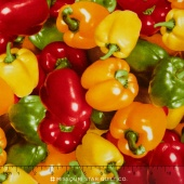 Farmer's Market - Peppers Yardage